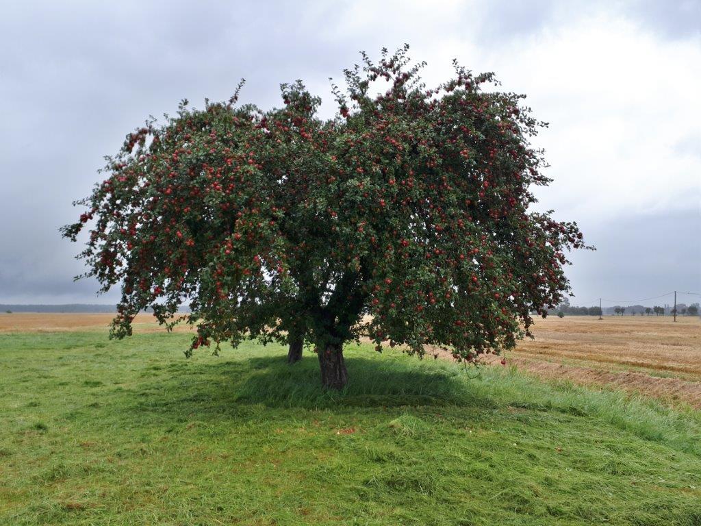 beuko obstbaumpflege